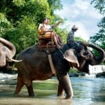 wisata naik gajah bali