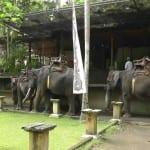 wisata naik gajah bali 3