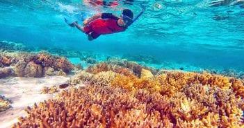 paket snorkeling ke pulau menjangan